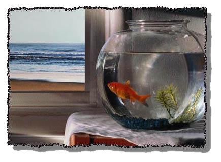 ماهی تنگ در حسرت دریا